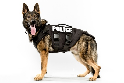 Seattle's Canine Police Force