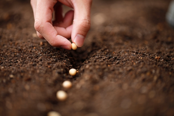planting-seeds
